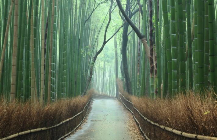 BambooPath1000